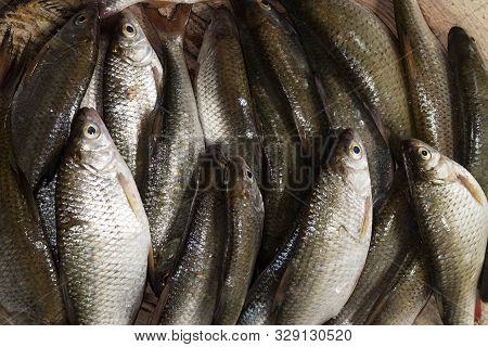 A Pile Of Roach Fish On A Wooden Table. Shop Of The Local Seafood Market. Fresh Catch Of Fish. River