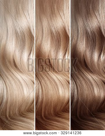 Natural Dyed Hair Colors Set. Tints. Hair Coloring Steps From Blonde To Brown. Strand Of Beautiful W