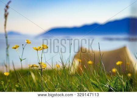 Meadow Flowers And Tent On Beach Seashore In Summer. Camping On Ocean Shore. Lofoten Archipelago Nor