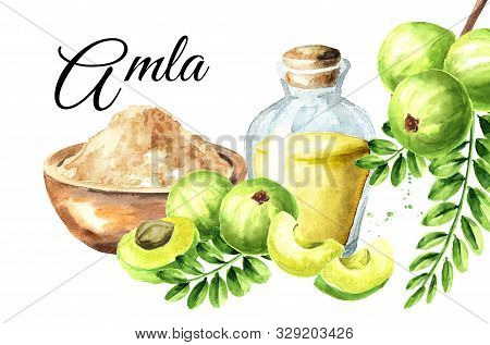 Amla Card.powder, Esential Oil And Green Ripe Fruits With Leaves, Watercolor Hand Drawn Illustration