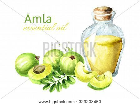 Amla Essential Oil Bottle With  Green Amla Berries. Watercolor Hand Drawn Illustration, Isolated On