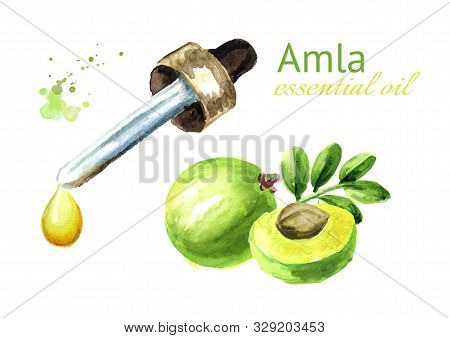 Amla Essential Oil Drop. Watercolor Hand Drawn Illustration, Isolated On White Background