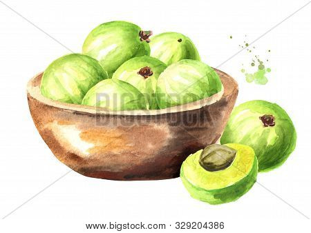 Bowl With Ripe Amla Berries. Watercolor Hand Drawn Illustration, Isolated On White Background
