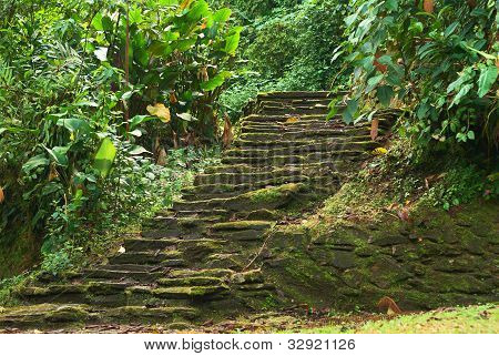 Old stone stairs in Ciudad Perdida (Lost City) built by the people of Tayrona. This archeological site is close to Santa Marta in the Sierra Nevada Northern Colombia. poster