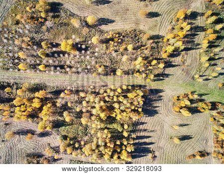 Autumn Park Trees