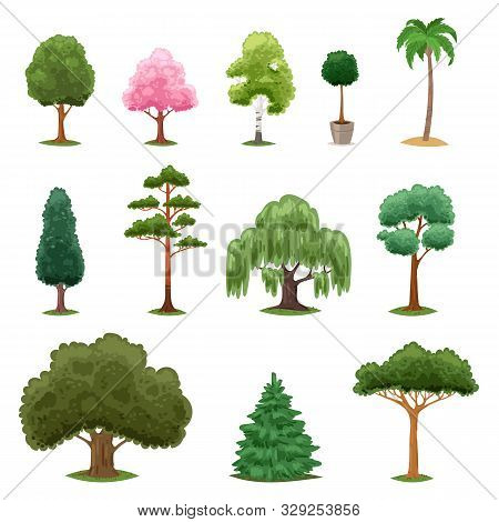 Tree Types Vector Green Forest Pine Treetops Collection Of Fir Palm Birch Cedar Greenery Garden With
