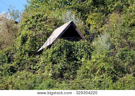 Barely Visible Small Wooden Cottage With Pointy Roof Covered With Large Tiles Almost Completely Cove