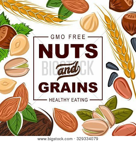Nuts And Grains, Natural Healthy Food Organic Cereals Nutrition. Vector Gmo Free Coconut, Hazelnut O
