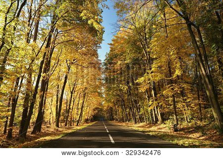 Road autumn morning Nature background Foliage yellow leaves in autumn forest Forest road path Travel Nature Nature background Road in autumnal forest Nature background Trees at sunrise Nature outdoor trees in fall woods Nature background Colors Sun Road.