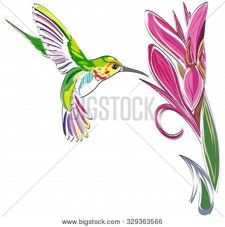 Hummingbird. Vector Illustration Of Exotic Flying Colibri Bird With Flower Isolated On White Backgro