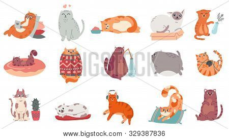 Cute Cats. Funny Cat In Box, Adorable Sleeping Kitty And Fat Cat In Sweater Vector Illustration Set.