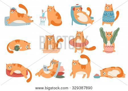 Cute Cats. Cat In Box, Adorable Red Kitty Sleeping And Fat Cat In Fur Sweater Vector Illustration Se