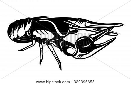 Vector Illustration With Crayfish On White Background.