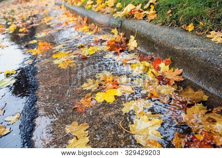 Fall leaves clogging stormwater drains at the curb in the street poster