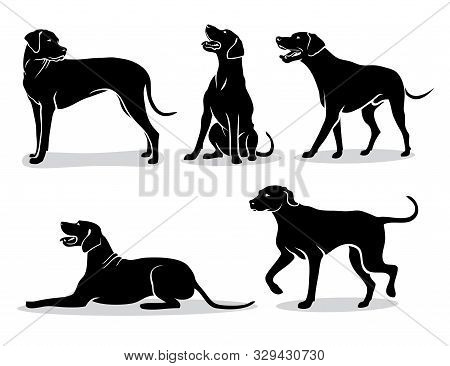 Set Of Rhodesian Ridgeback Dog Silhouettes - Isolated Vector Illustration