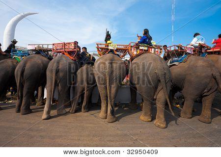 Elephant Breakfast Rear End H