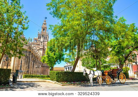 Horse Carriage With A White Horse Standing Under The Tree In The Historical Center Of Seville, Andal