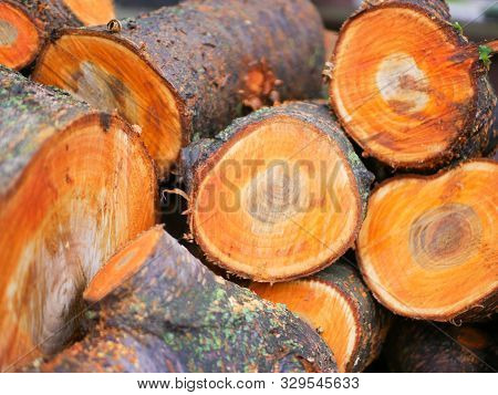 Tree Felling Concept. Deforestation. Deforestation Concept Image Consisting Of Cut Down Forest Trees