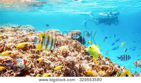 Coral reefs and fish and diver, wonderful underwater world