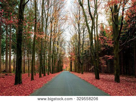An Empty Road In A Forest During Autumn Season