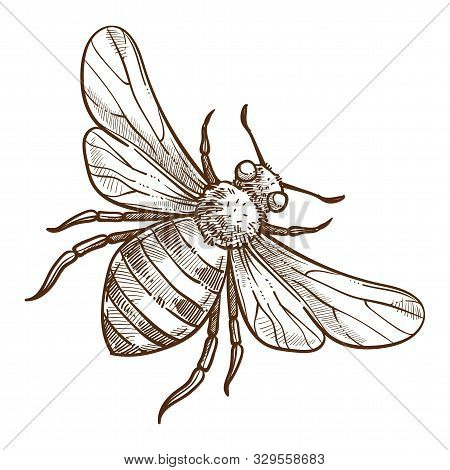 Stinging Insect, Bee Isolated Sketch, Striped Bug