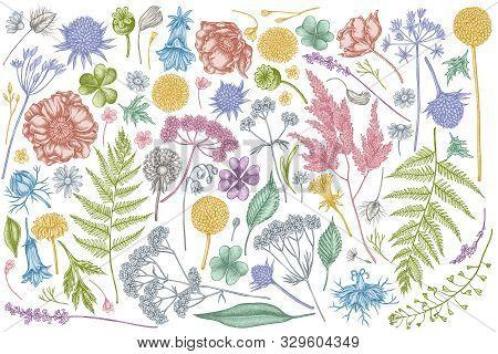 Vector Set Of Hand Drawn Pastel Shepherds Purse, Heather, Fern, Wild Garlic, Clover, Globethistle, G