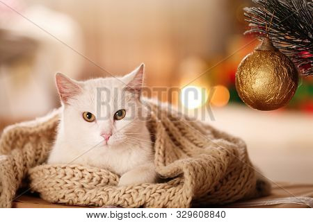 Cute White Cat With Scarf In Room Decorated For Christmas. Adorable Pet
