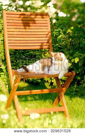 Adult Cat Rests On Wooden Chair In Garden