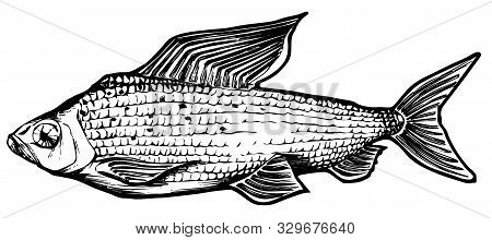 Grayling, Vector Illustration, Hand-made Graphics For Packaging, Labels, Tattoos, Menuos,