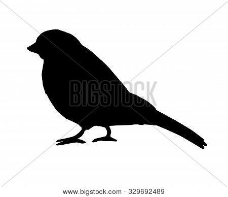 Vector Black Bullfinch Sparrow Bird Silhouette Isolated On White Background