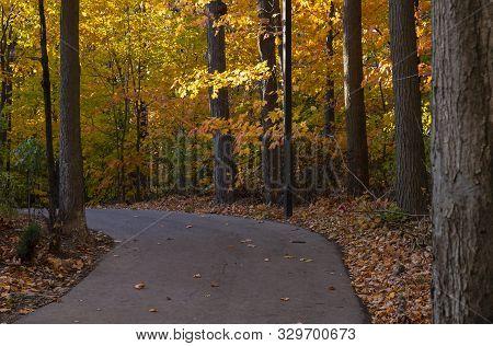 Colorful Fall Foliage Along A Beautiful Path Through The Woods