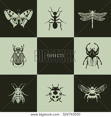 Insects In Realistic Style. Butterfly, Ant, Dragonfly, May Beetle, Wasp, Ladybug, Bumblebee. Perfect