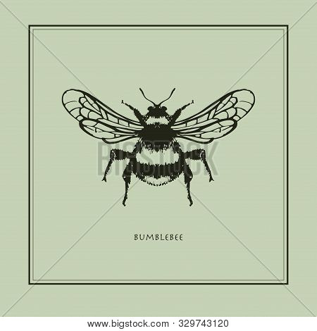 Bumblebee On A Beige Background In A Realistic Style. Drawn. Perfect For Printing, Interior, Poster,
