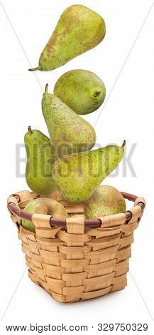 Fresh And Raw Green Pears Fresh From The Tree (variety Conference, Pyrus Communis Conference) Dynami