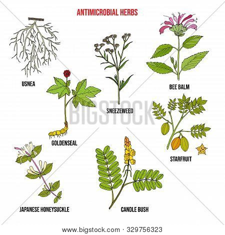 Set Of Antimicrobial Herbs. Hand Drawn Vector Collection Of Medicinal Plants