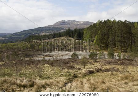 Scottish Highland Forrest