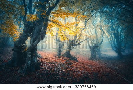 Beautiful Mystical Forest In Blue Fog At Sunrise In Autumn. Colorful Landscape With Enchanted Trees
