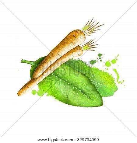 Horseradish Isolated On White. Horseradish Armoracia Rusticana, Cochlearia Armoraciaperennial Plant