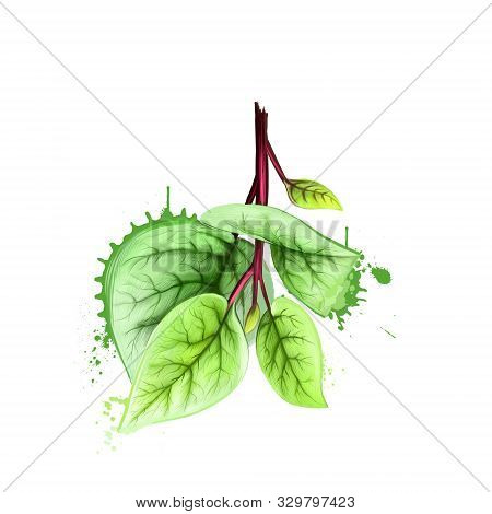 Bunch of fresh spinach. Green raw spinach leaves isolated on white. For agriculture, vegetables, cooking, health food, gastronomy, floriculture, etc. Herb and spices series. Digital art illustration. poster