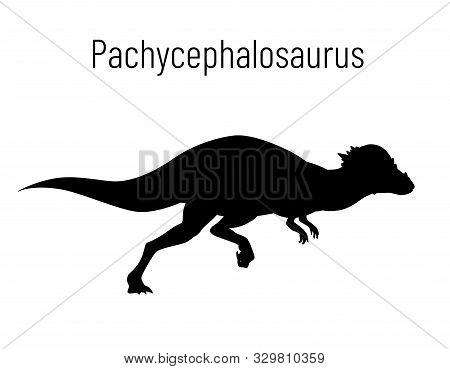 Pachycephalosaurus. Ornithischian Dinosaur. Monochrome Vector Illustration Of Silhouette Of Prehisto