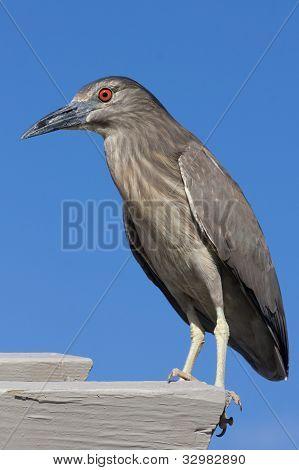 Heron Nail