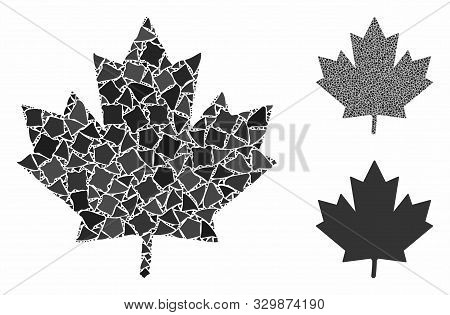 Maple Leaf Composition Of Rough Pieces In Various Sizes And Color Tones, Based On Maple Leaf Icon. V