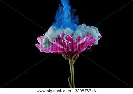 Flower Under Water And Splashes Of Colored Ink, Bright Colors. Creative And Color Mix, Abstract Swir