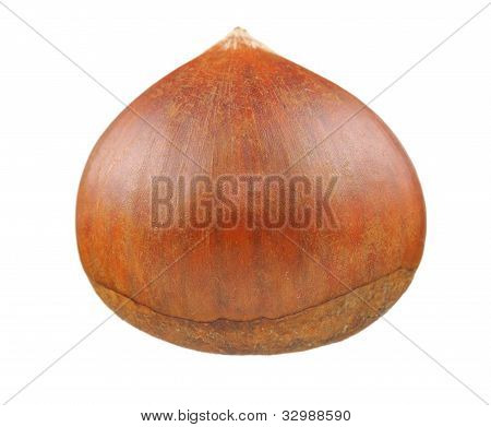 Chestnut Close-up Isolated On White Background