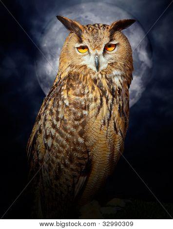 Bubo bubo eagle owl night bird in full moon cloudy dramatic night
