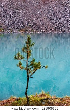 Beautiful Lonely Little Tree On The Shore Of A Beautiful Lake, A Feeling Of Peace And Relaxation.