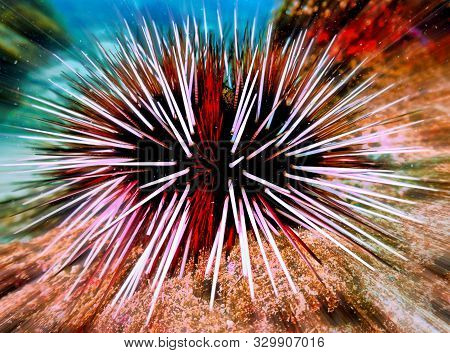 Underwaterphoto Of A Sea Urchin From A Scuba Dive Off The Coast Of Aonang In Thailand.