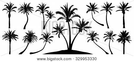 Palm Trees Silhouette. Isolated Objects On A White Background. Vector Set Tropical Trees