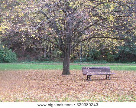 Der Schönste Herbst In Deutschland Und Auf Einem Stuhl Unter Dem Baum Sitzen Mit Fallende Baumblätte