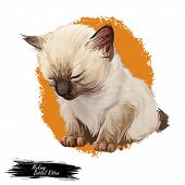 Mekong bobtail kitten digital art illustration. Sleeping catty watercolor portrait. Cute face of furry catty from South East Asia. Realistic drawing of catus muzzle and body on orange background poster